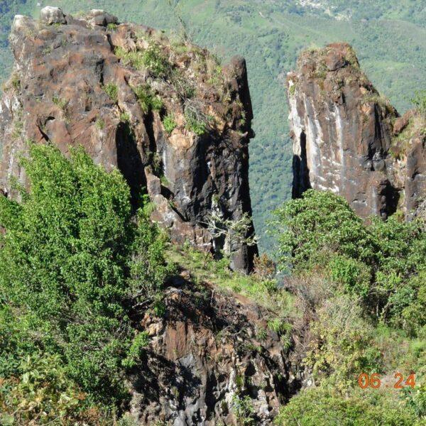 Territorios de Páez con proyectos de reforestación con plantas nativas